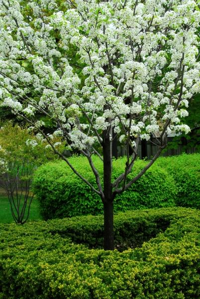 träd och buskar i trädgården